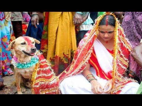 Xxx Mp4 कुत्ते और लड़की की शादी जिसे देखकर हैरान रह जायेंगे आप 3gp Sex