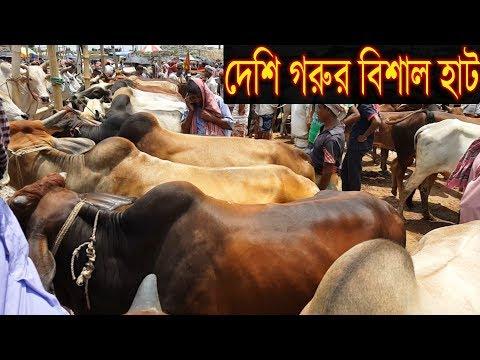 Xxx Mp4 দেশী ষাঁড় গরুর ব্যাপক আমদানি।Desi Cow Price Update In Market 2018 3gp Sex