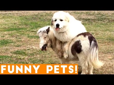 Xxx Mp4 Funniest Pets Of The Week Compilation March 2018 Funny Pet Videos 3gp Sex