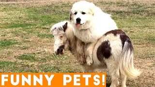 Funniest Pets of the Week Compilation March 2018 | Funny Pet Videos