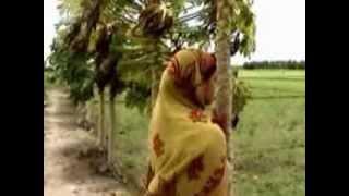 বন্ধুরে অন্তরতে বাঁধলি বাসা, বাধলিনা কেন ঘরঃ আধুনিক পল্লী গান (পলক রহমান)