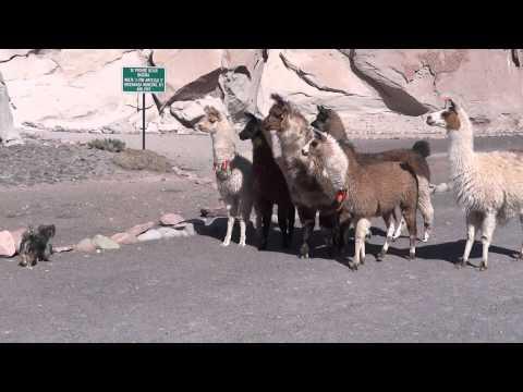 Xxx Mp4 Llamas Dog Sex And Videotape Atacama Chile 3gp Sex