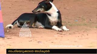 Stray dogs become a mess for Kulathupuzha natives