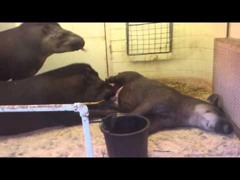 Xxx Mp4 Tapir Oral Sex 3gp Sex