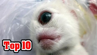 Top 10 MOST SHOCKING Animal Mutations