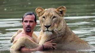 man swim with lions شاهد الرجل الدي يسبح مع الاسود