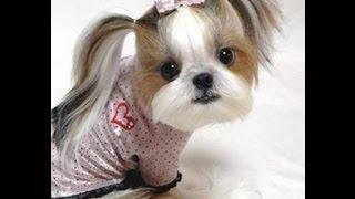 Kumpulan Gambar Anjing Paling Lucu dan Menggemaskan