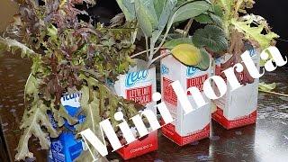 Como Fazer uma Horta Sem Gastar R$ 1,00