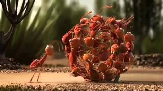 Funny Ant Videos Insects Funny Clips