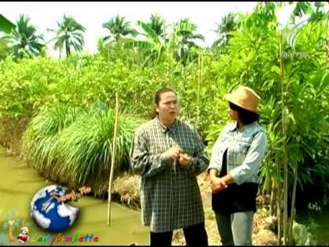 เกษตรอินทรีย์คลองจินดา 20Mar12