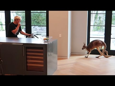 FIGHTING OFF WILD KANGAROO THAT BROKE INTO OUR HOUSE real footage