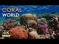 Download Video Download 4K Coral World - Tropical Reef Fish - Relaxing Underwater Ocean Video & Sounds - No Loop - Ultra HD 3GP MP4 FLV