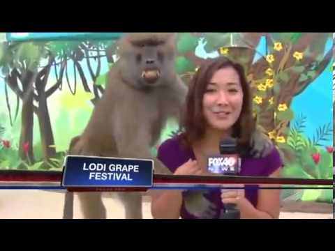 Xxx Mp4 Baboon Gropes Hot Asian TV Reporter Chick 3gp Sex