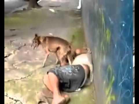 Cachorro comendo homem de rua