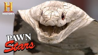 Pawn Stars: Taxidermy Cobra for sale...or Not?   History