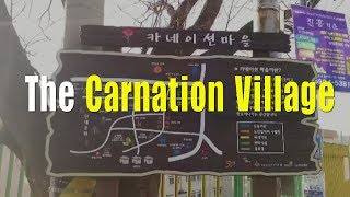The Carnation Village