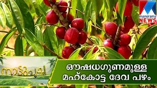 Medicinal plants Mahkotta Deva in Nattupacha  | Manorama News