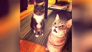 CATS ROCKIN
