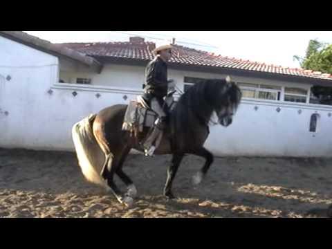 caballo bailador el borracho parte 1