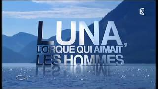Thalassa : Luna, l'orque qui aimait les hommes