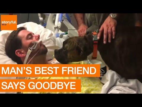 Dog's Final Goodbye at Owner's Hospital Bedside