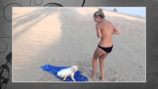 Best Funny Animals 2015 - Dog stolen her bra