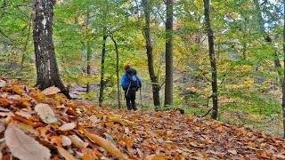 Walkin' Holland - Autumn on the Hills SE of Nijmegen [Nov. 6, 2016]