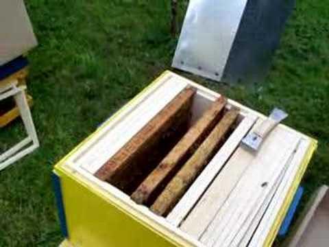 osadzanie roju pszczelego z odkładu