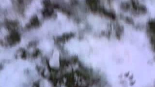 MooMovies-Fail