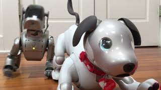 Old Aibo vs New Aibo: ERS-110 and ERS-1000