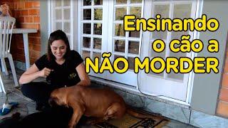 Ensinando o cachorro a não morder - Momento Pet - Adestramento