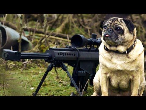 Xxx Mp4 Sniper Pug 3gp Sex