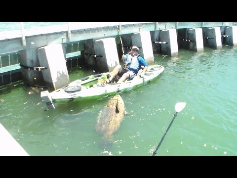 Fishing Rod Big Catch Kayak Video! Goliath Grouper! Cape Coral Man Angler Catches Big Bottom Fish