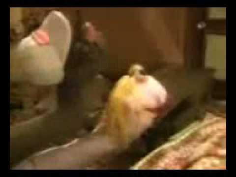 Xxx Mp4 Sock Puppet Porn 3gp 3gp Sex