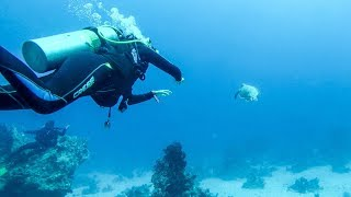 Chasing a Turtle at the Bottom of the Coral Reef. Scuba Diving in The  Red Sea, Egypt