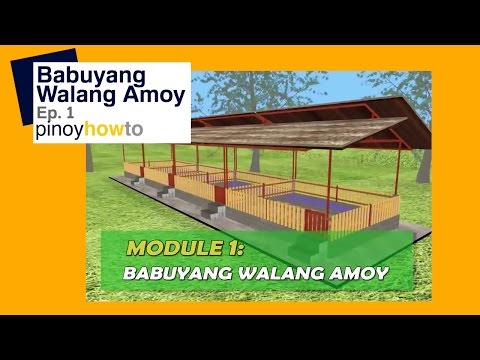 How to Raise Pigs Babuyang walang amoy or Odorless Pigpen Episode 1 October 2013 Update