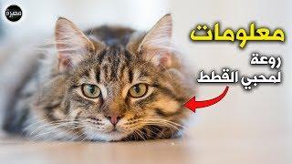 معلومات و حقائق رائعة ستسعد محبي القطط  : ( مِحبرة )