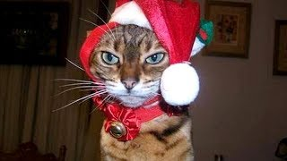 CATS and DOGS with CHRISTMAS PRESENTS - You