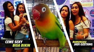BRANDY WATCH : Nah Ini Dia! Parade Cewe Sexy Bisa Bikin Burung Gesek Tangkringan - GESTANG