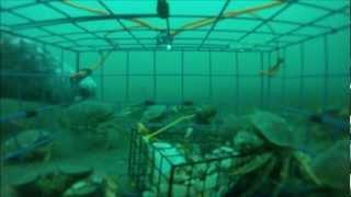 Crabbing in Victoria, BC, Canada