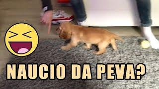 NAUCIO JE DA PEVA !!  DRESIRAM PSA !
