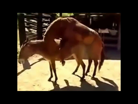 Xxx Mp4 Mating Donkey Video 3gp Sex