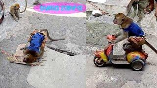Topeng Monyet Terbaru - Zahra lihat monyet sholat dan naik motor