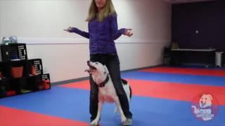 Funny dog dancing with girl