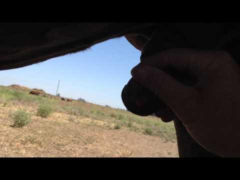 Cleaning a Horse Sheath - Locating the Bean Part 2 - Rick Gore Horsemanship