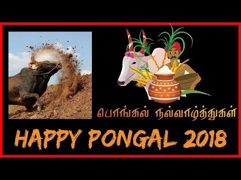 Xxx Mp4 Pongal Special Bogi Pongal Mattu Pongal Kaanum Pongal Festival Jallikattu Pride Noolbox 3gp Sex