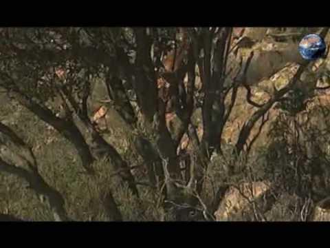 cazar monteria