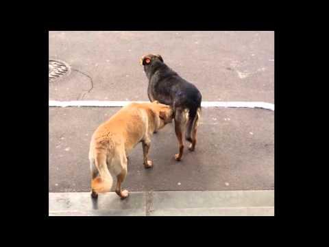 Xxx Mp4 Dog Blow Job 3gp Sex