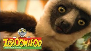Zoboomafoo 137 - Cats (Full Episode)  Episode 1 138