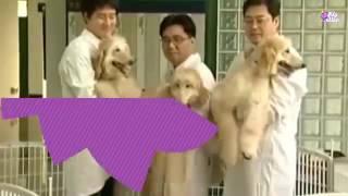 10 حيوانات مستنسخة ومعدله وراثياً صنعها الأنسان !